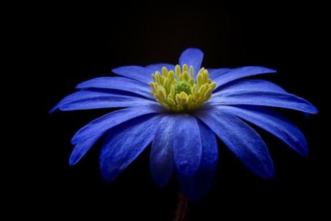 Il potere del colore blu: il punto di vista della psicologia dei consumi