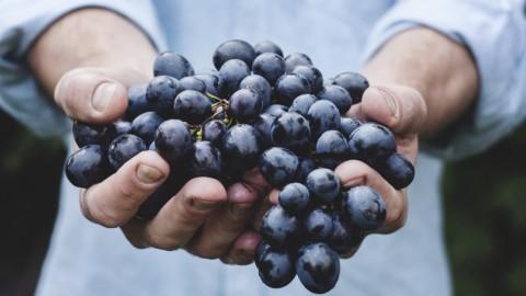 Go green: continua la crescita del settore biologico